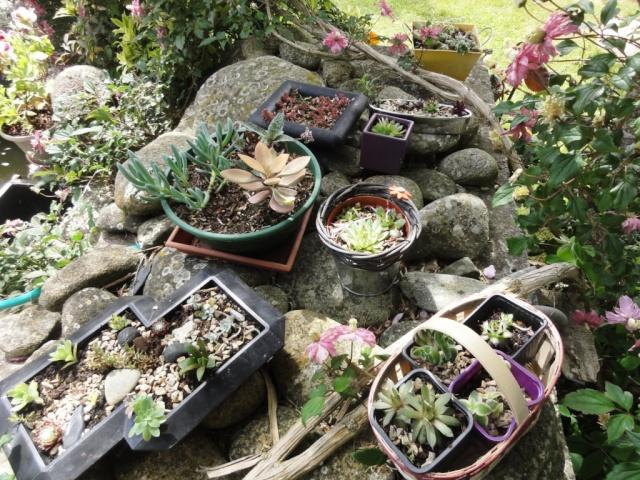 (22, 29, 35, 56) Bienvenue dans mon jardin - visite de jardins privés Dsc01935