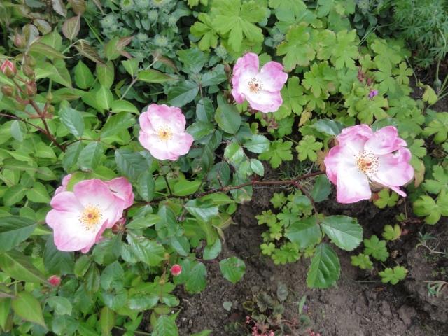 (22, 29, 35, 56) Bienvenue dans mon jardin - visite de jardins privés Dsc01938