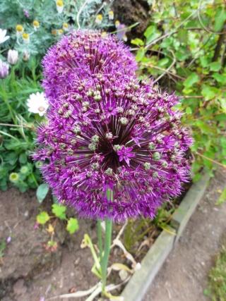 (22, 29, 35, 56) Bienvenue dans mon jardin - visite de jardins privés Dsc01939