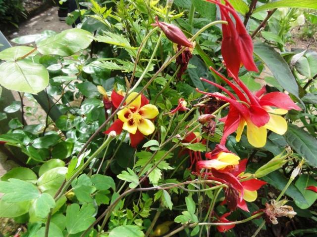 (22, 29, 35, 56) Bienvenue dans mon jardin - visite de jardins privés Dsc01940