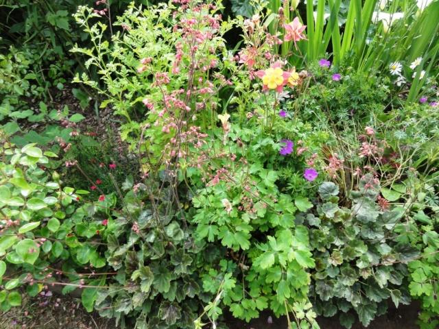 (22, 29, 35, 56) Bienvenue dans mon jardin - visite de jardins privés Dsc01941