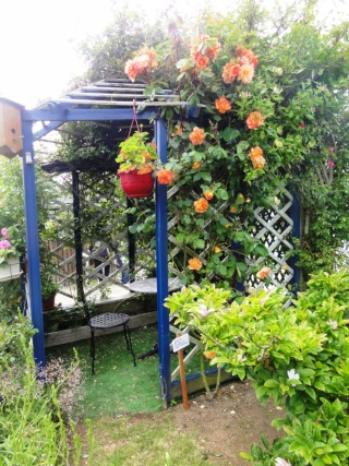 (22, 29, 35, 56) Bienvenue dans mon jardin - visite de jardins privés Dsc01942