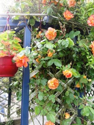 (22, 29, 35, 56) Bienvenue dans mon jardin - visite de jardins privés Dsc01944