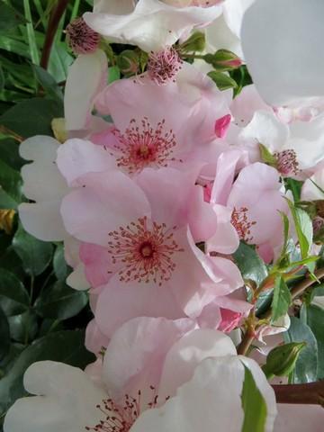 32 - La couleur rose !!! Img_0210