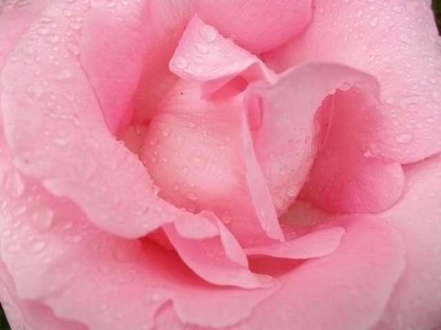 32 - La couleur rose !!! Juin_211