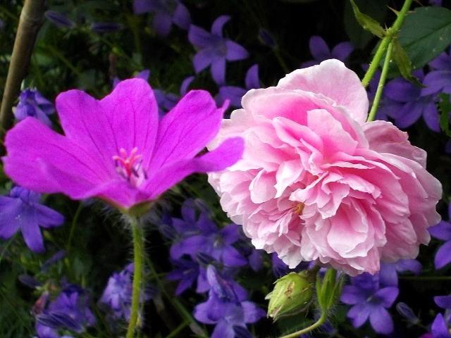 32 - La couleur rose !!! Rscn7910