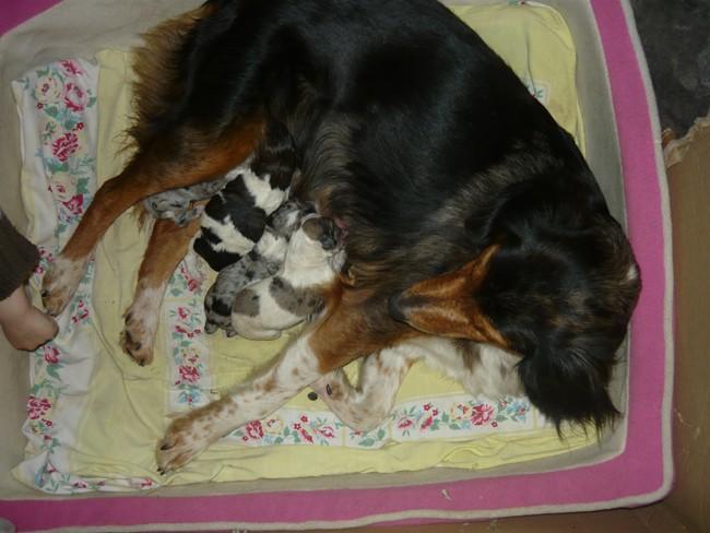 Les bébés de ma chienne sont là !! P1060210