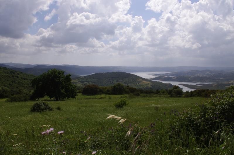 Retour de Sardaigne (mai 2013) Imgp0824