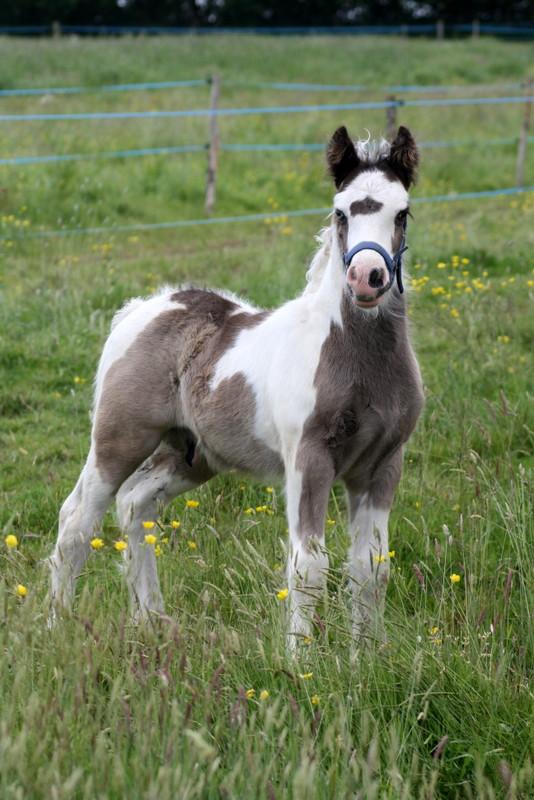 Désigual, (Queen x Reiki), 1ier bébé a la petite gravelais . Img_9219