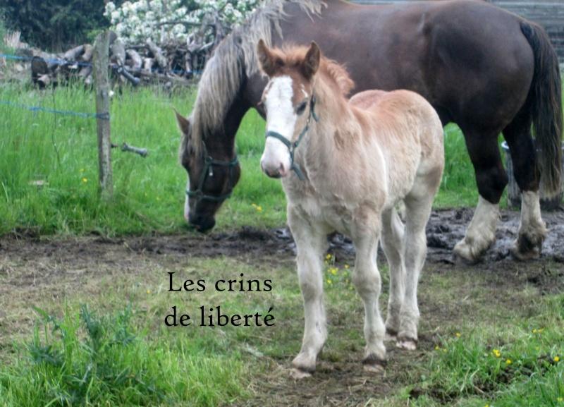 Dpt 35 - Doudou de la rablais - Trait Breton PP - Sauvé par Gaëlle ! (Août 2014) - Page 2 Img_0011