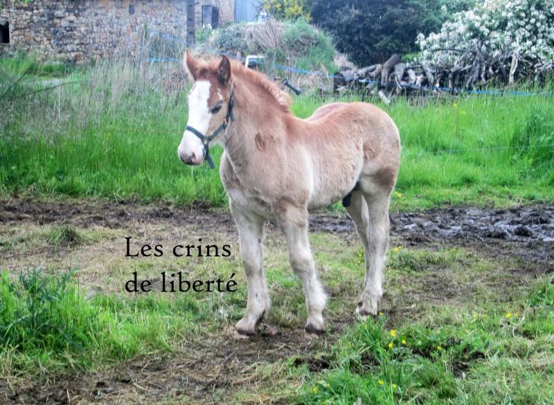 Dpt 35 - Doudou de la rablais - Trait Breton PP - Sauvé par Gaëlle ! (Août 2014) - Page 2 Img_0012