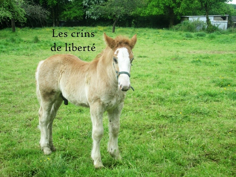 Dpt 35 - Doudou de la rablais - Trait Breton PP - Sauvé par Gaëlle ! (Août 2014) - Page 2 Img_0013