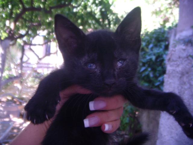 Μαυρο γατακι με προβλημα στα ματια! Dscn4913