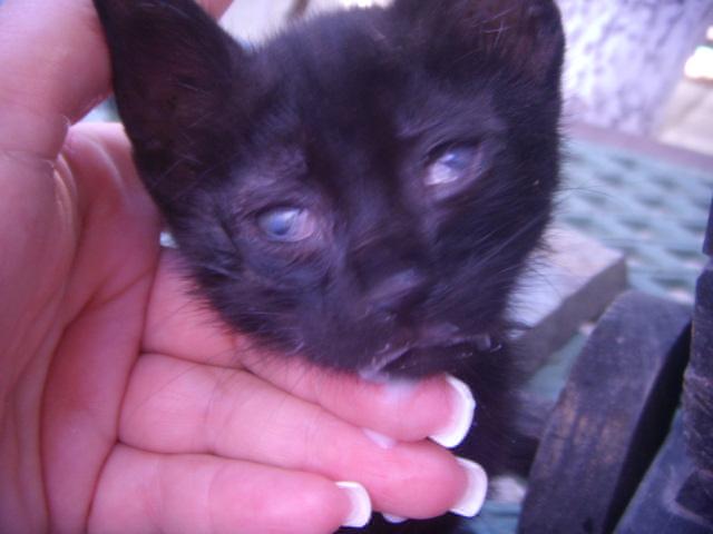 Μαυρο γατακι με προβλημα στα ματια! Dscn4914