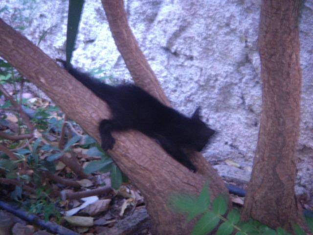 Μαυρο γατακι με προβλημα στα ματια! Dscn4921