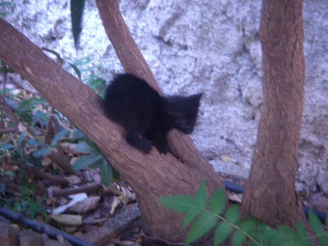 Μαυρο γατακι με προβλημα στα ματια! Dscn4922