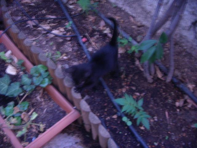 Μαυρο γατακι με προβλημα στα ματια! Dscn4924