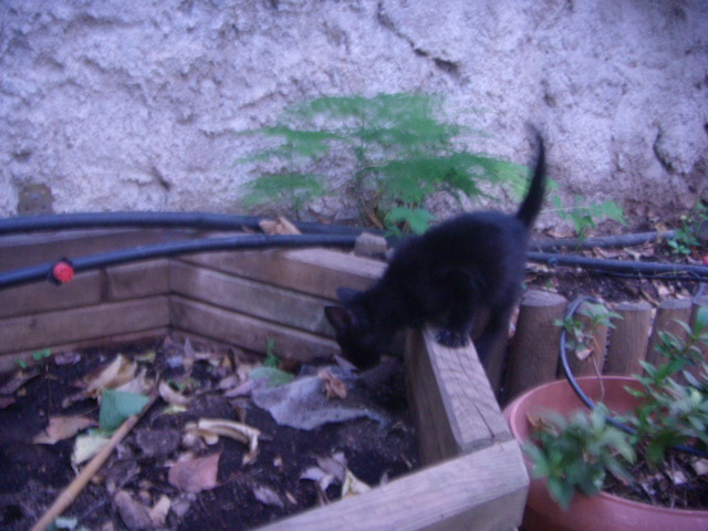 Μαυρο γατακι με προβλημα στα ματια! Dscn4925