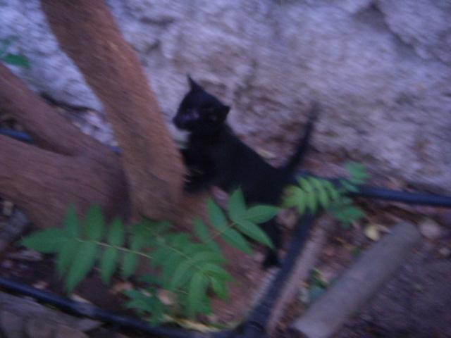 Μαυρο γατακι με προβλημα στα ματια! Dscn5011