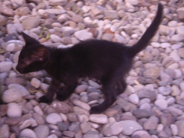 Μαυρο γατακι με προβλημα στα ματια! Mpempa14