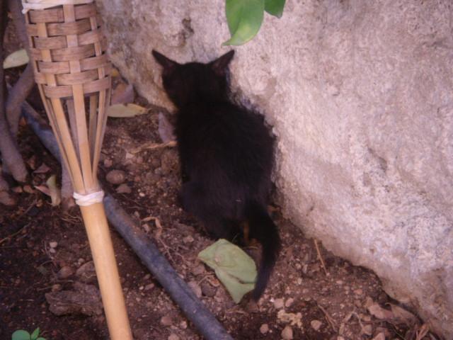 Μαυρο γατακι με προβλημα στα ματια! Mpempa20