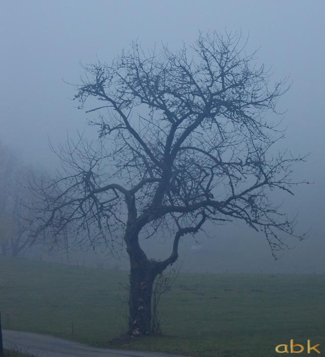 Balade dans le brouillard, sur un versant du champ du feu Brume110