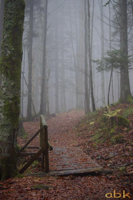 Balade dans le brouillard, sur un versant du champ du feu Brume210