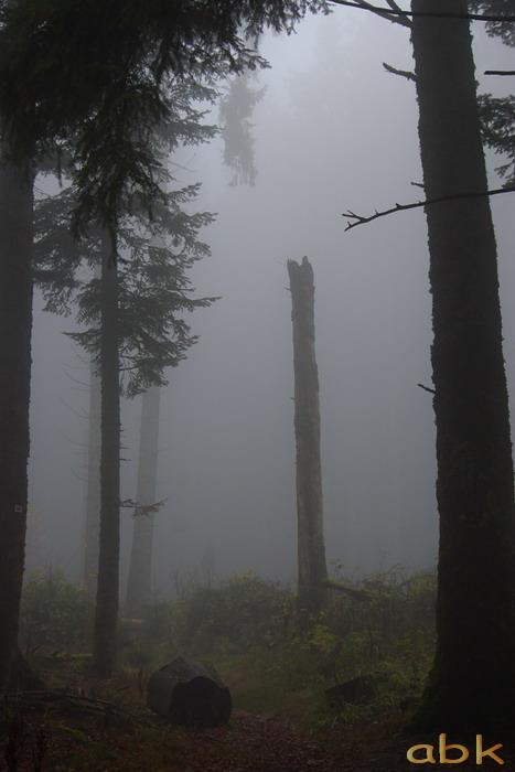 Balade dans le brouillard, sur un versant du champ du feu Brume310