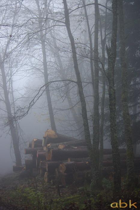 Balade dans le brouillard, sur un versant du champ du feu Brume410