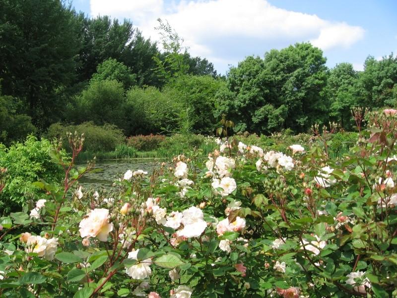 Les chemins de la rose Doué la Fontaine Img_0613