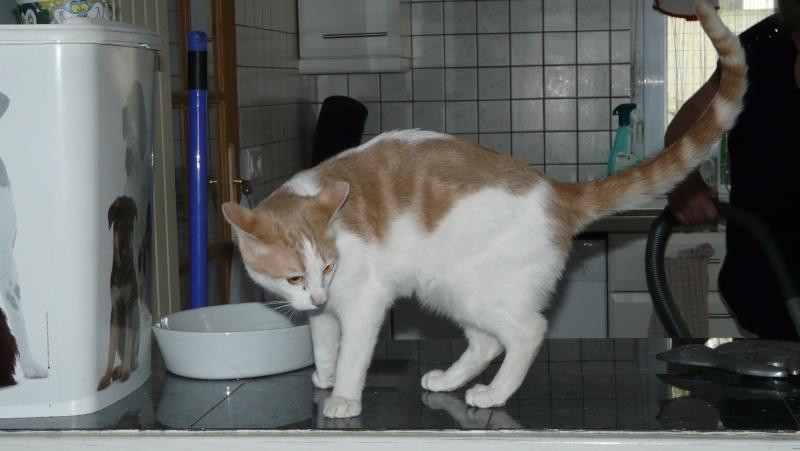 Urgence adoption pour une trentaine de chats P1290910