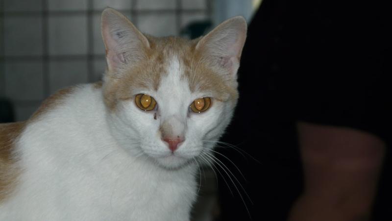 Urgence adoption pour une trentaine de chats P1290911