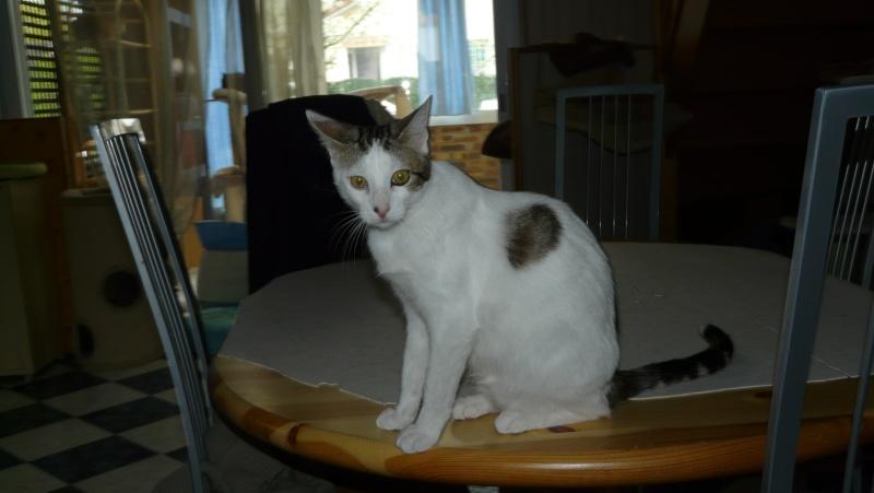 Urgence adoption pour une trentaine de chats P1290912