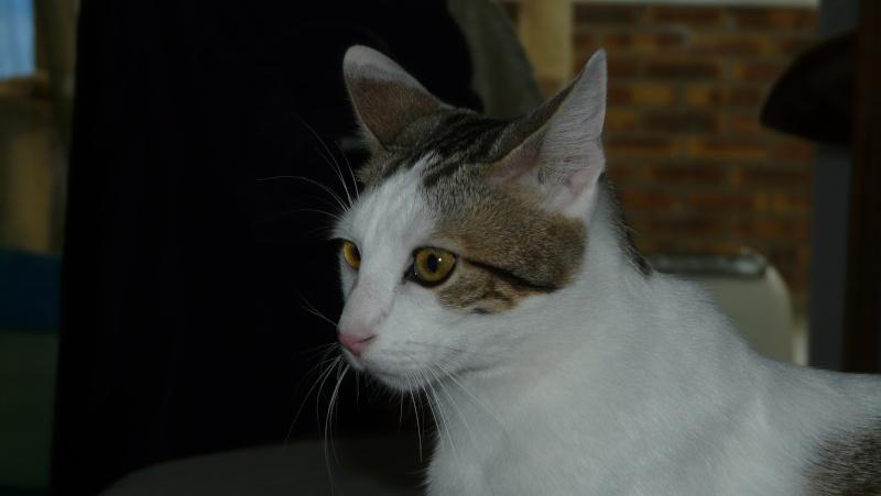 Urgence adoption pour une trentaine de chats P1290913