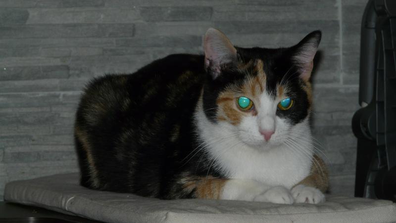Urgence adoption pour une trentaine de chats P1290914