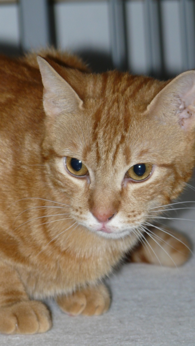 Urgence adoption pour une trentaine de chats P1290915