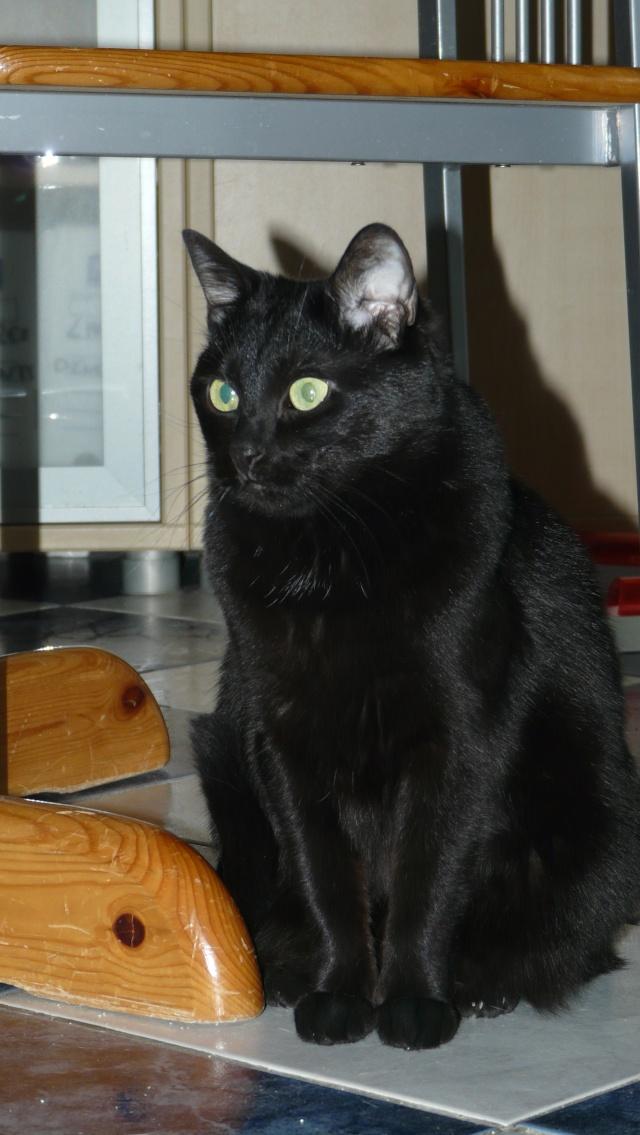 Urgence adoption pour une trentaine de chats P1290916