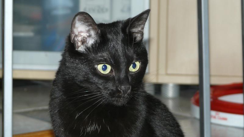 Urgence adoption pour une trentaine de chats P1290917