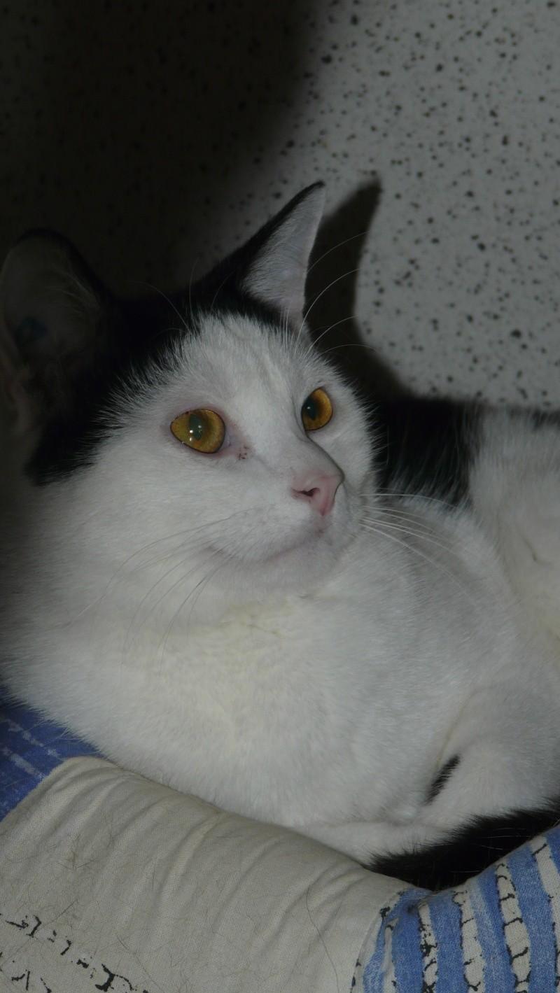 Urgence adoption pour une trentaine de chats P1290918
