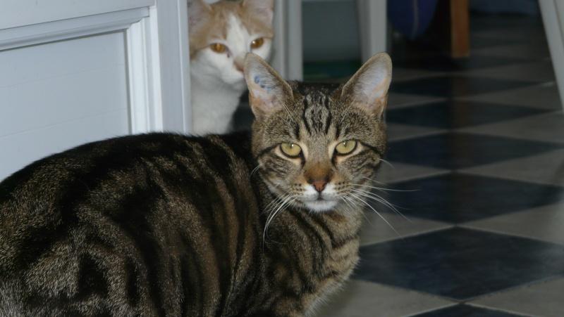 Urgence adoption pour une trentaine de chats P1300010