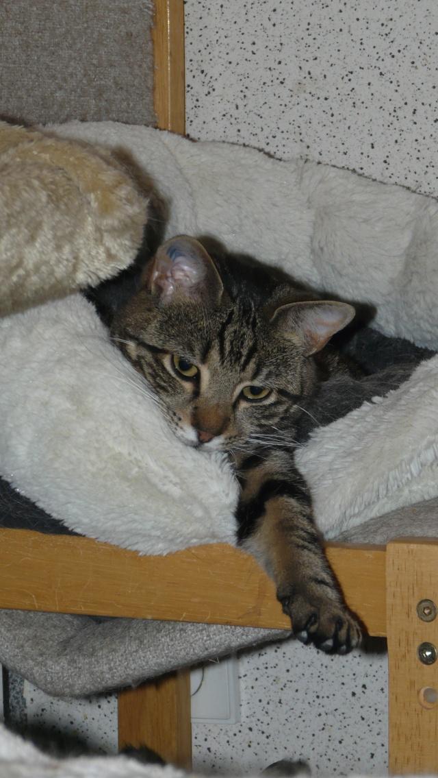 Urgence adoption pour une trentaine de chats P1300011