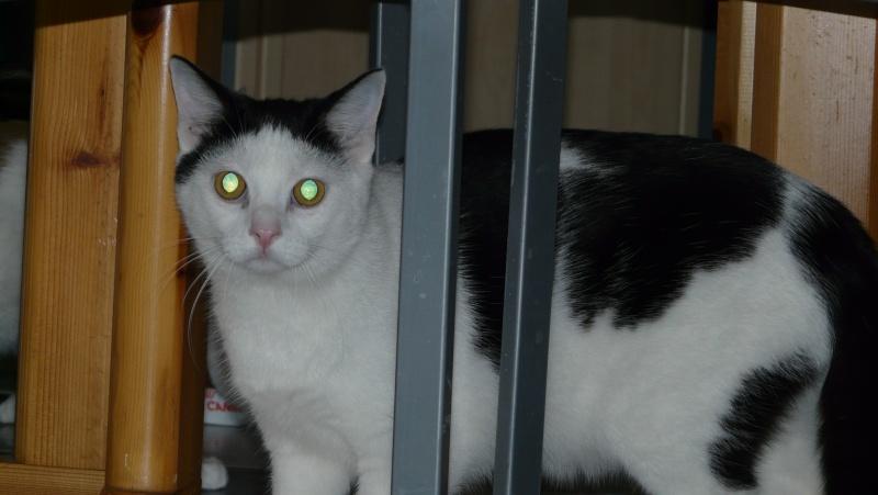 Urgence adoption pour une trentaine de chats P1300012