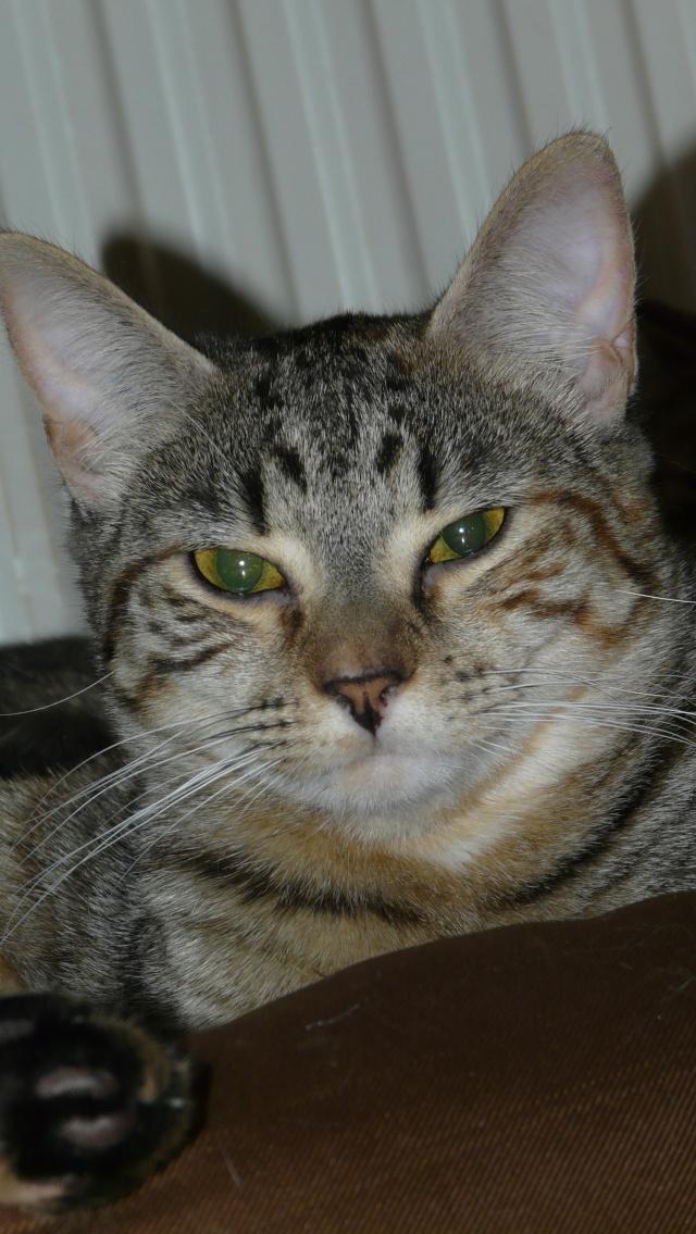 Urgence adoption pour une trentaine de chats P1300013
