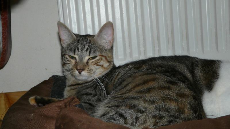 Urgence adoption pour une trentaine de chats P1300014