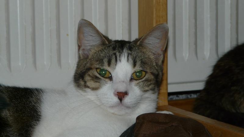 Urgence adoption pour une trentaine de chats P1300015