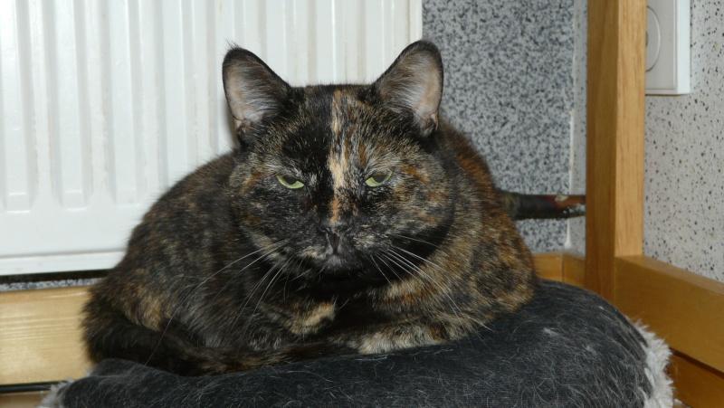 Urgence adoption pour une trentaine de chats P1300016