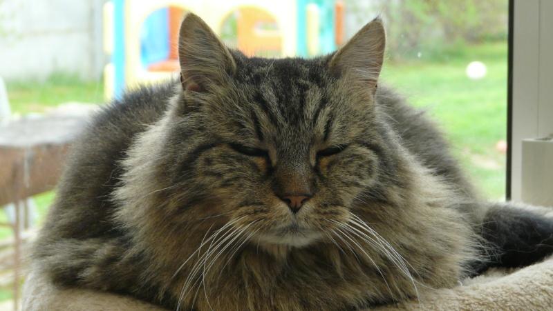 Urgence adoption pour une trentaine de chats P1300017
