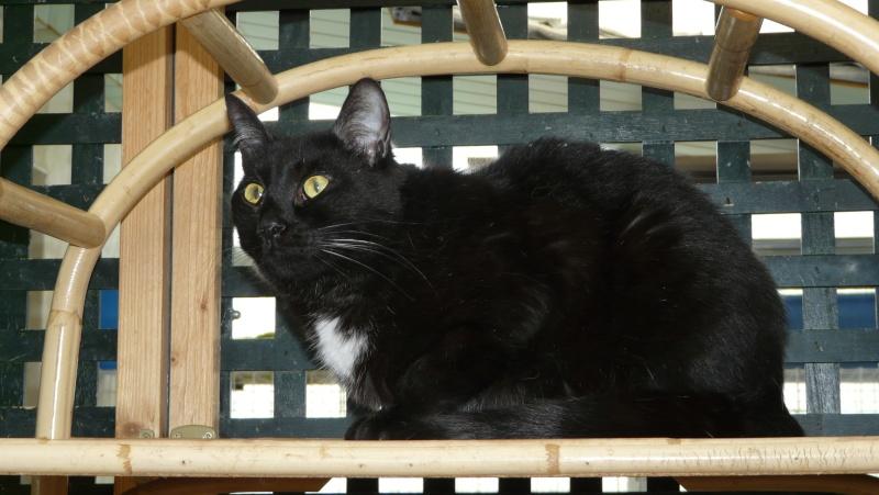 Urgence adoption pour une trentaine de chats P1300018