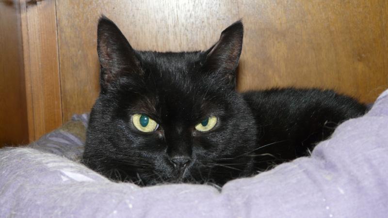 Urgence adoption pour une trentaine de chats P1300019