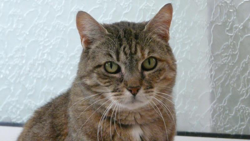Urgence adoption pour une trentaine de chats P1300020